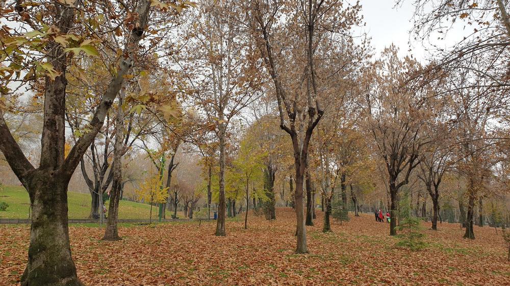 پارک ملت