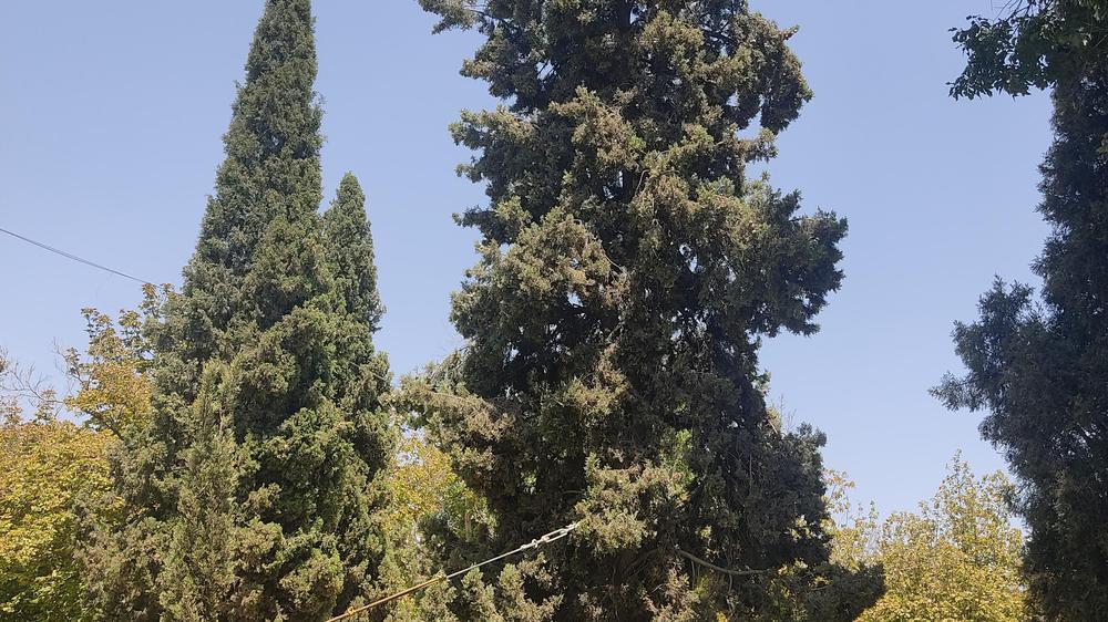 بوستان خلدبرین