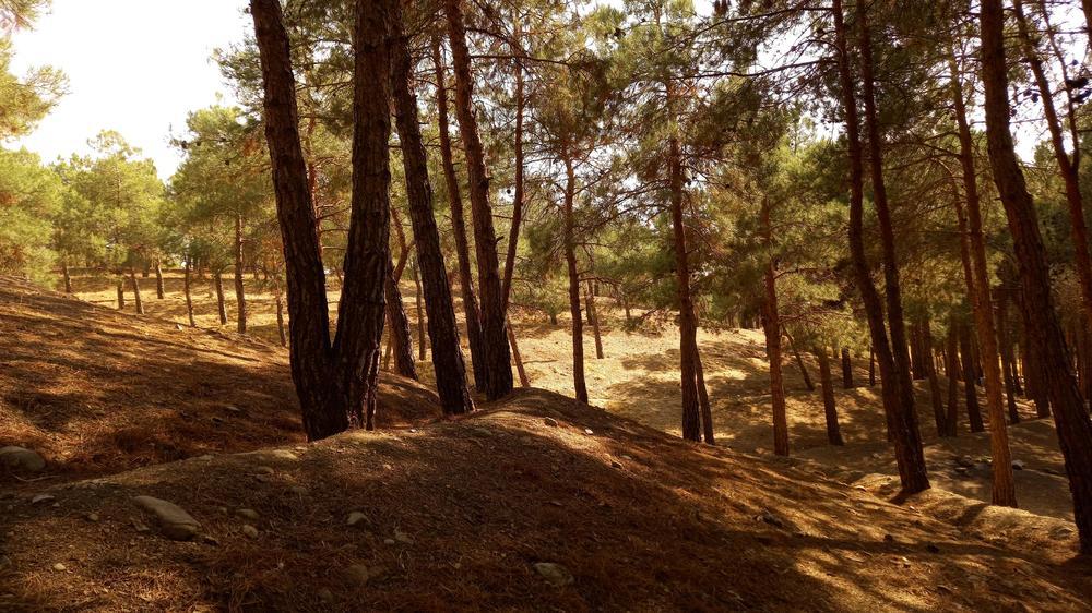 پارک جنگلی چیتگر